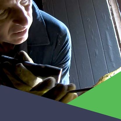 Picture of Timber Pest: Inspections and Management Grandfathered Licence Course